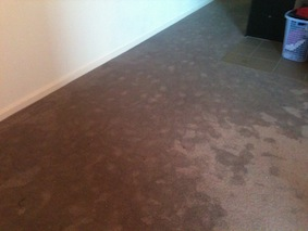 Flooded Carpet Cleaning London